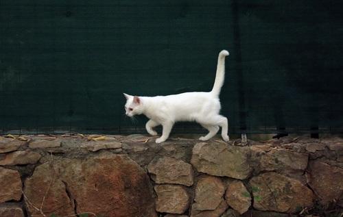 Kitten walking on stone wall Stock Photo