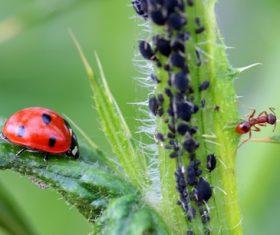 Ladybug and ant macro photography on plants Stock Photo