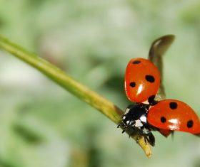 Ladybug macro photography Stock Photo