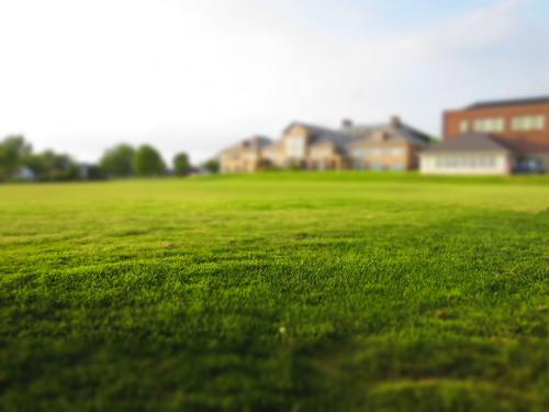Large lawn in front of the house Stock Photo