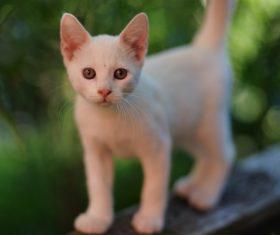 Look at your kitten Stock Photo