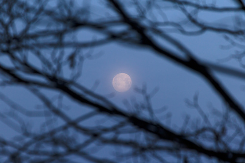 Looking at the moon through the branches Stock Photo