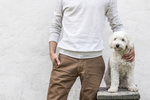 Man with white pet dog Stock Photo
