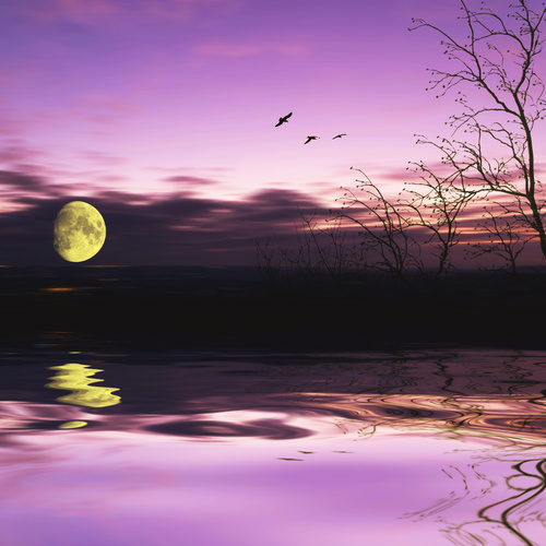 Moon and flying birds Stock Photo