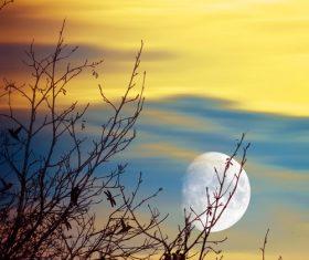 Moon tree natural scenery Stock Photo