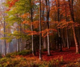 Nature landscape fall mist forest coloful ferns trees leaves Stock Photo