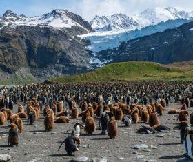 Penguin Island Stock Photo