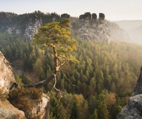 Pine trees on the cliff Stock Photo
