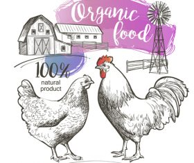 Qrganic food chicken hand drawn poster vector
