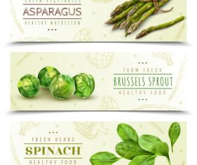 Realistic asparagus vegetables banners vector