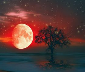 Red moon and tree Stock Photo