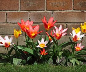 Several flowers growing in the corner of the brick wall Stock Photo