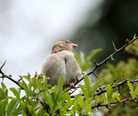 Small and delicate sparrow Stock Photo 08