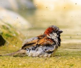 Small and delicate sparrow Stock Photo 10