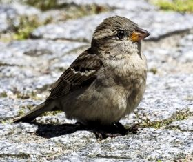 Small and delicate sparrow Stock Photo 11