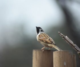 Small and delicate sparrow Stock Photo 12