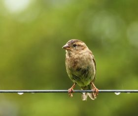Small and delicate sparrow Stock Photo 13