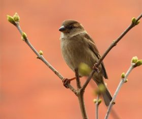 Small and delicate sparrow Stock Photo 14