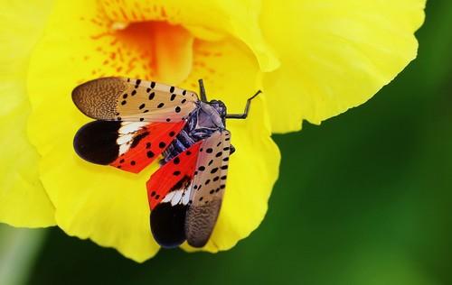 Spot clothing wax cicada Stock Photo 02