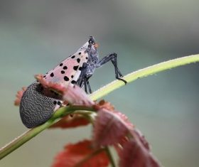 Spot clothing wax cicada Stock Photo 05