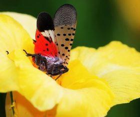 Spot clothing wax cicada Stock Photo 08