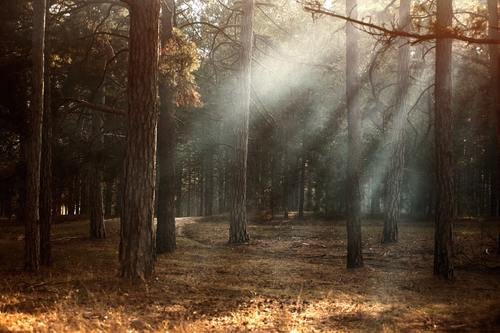 Stock Photo Woods landscape during sunny weather