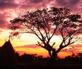 Sunset big tree natural scenery Stock Photo