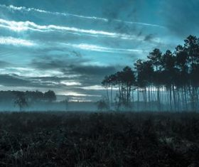 The woods filled with fog in the evening Stock Photo
