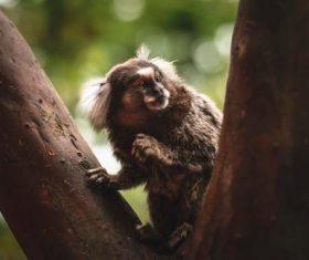 Thumb monkey on the tree Stock Photo