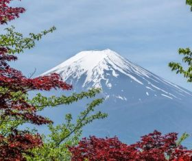 Tree branches and Mount Fuji background Stock Photo