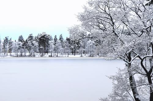 Trees and frozen lake after snow Stock Photo