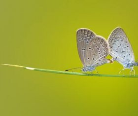Two butterflies close-up Stock Photo