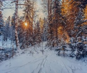 Warm sunshine in the snow-covered forest in winter Stock Photo