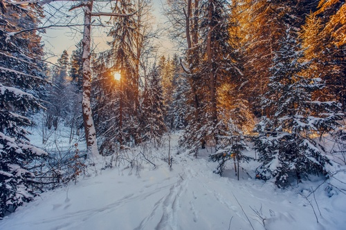 Warm sunshine in the snow covered forest in winter Stock Photo