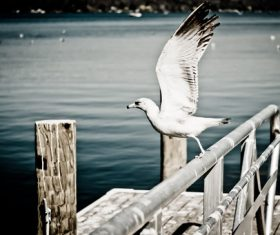 White Seagull Stock Photo