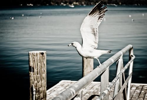 White Seagull Stock Photo
