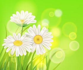 White chamomile with spring background vectors 01