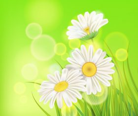 White chamomile with spring background vectors 02