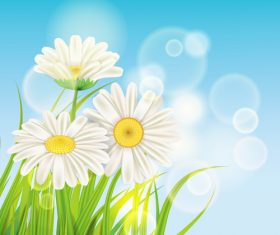 White chamomile with spring background vectors 04