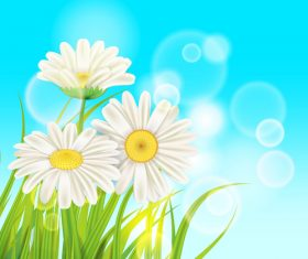 White chamomile with spring background vectors 05