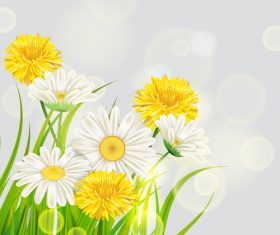 White with yellow chrysanthemum spring vector 01