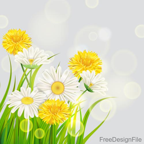 White with yellow chrysanthemum spring vector 01