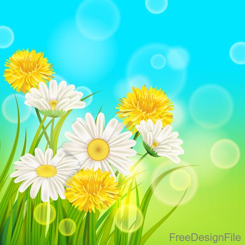 White with yellow chrysanthemum spring vector 02