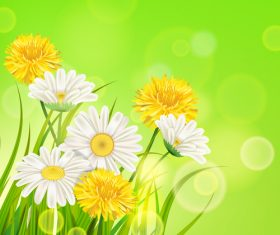 White with yellow chrysanthemum spring vector 03