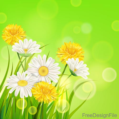 White with yellow chrysanthemum spring vector 03