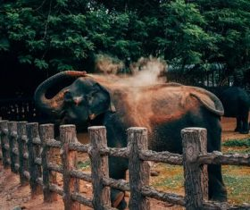 Zoo watching elephant Stock Photo