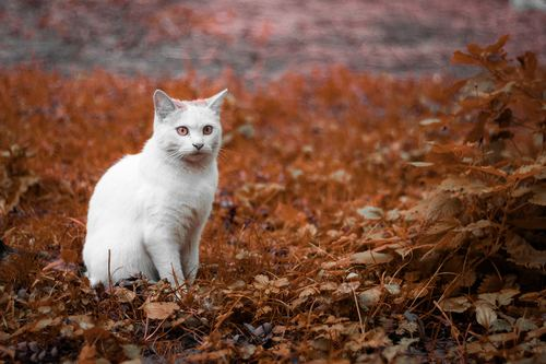 a little white cat outdoors Stock Photo