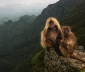 a pair of monkeys on the mountain Stock Photo