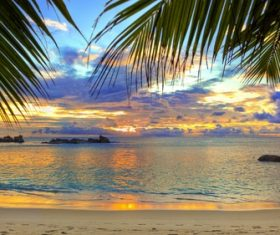 beach sea palm trees sky Stock Photo