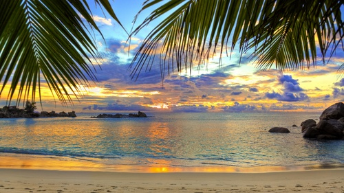 beach sea palm trees sky Stock Photo